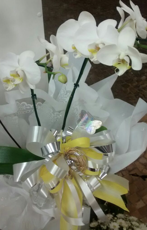 Flores Jequié - Floricultura Jequié - Produto 3