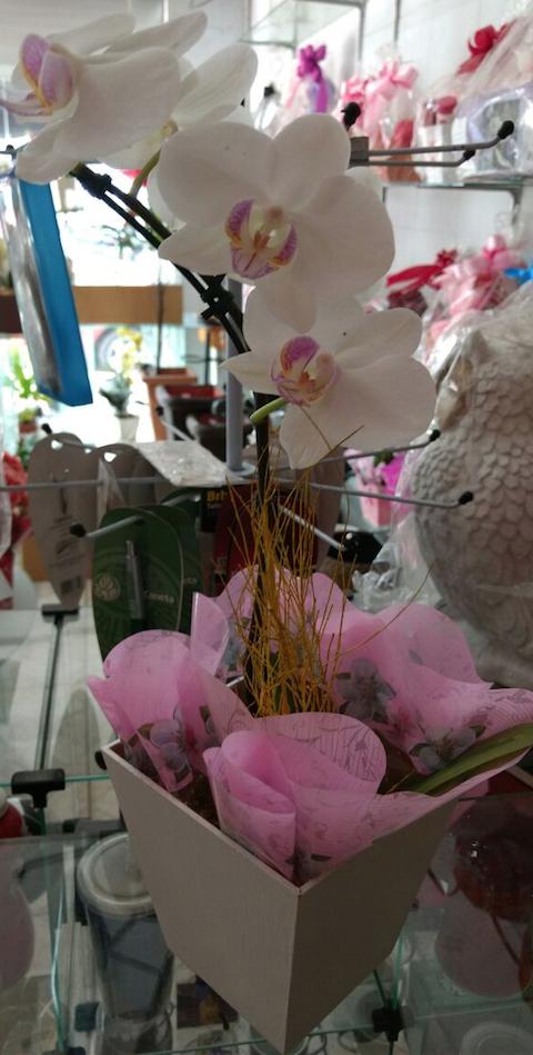 Flores Mauá - Floricultura Mauá - Produto 3
