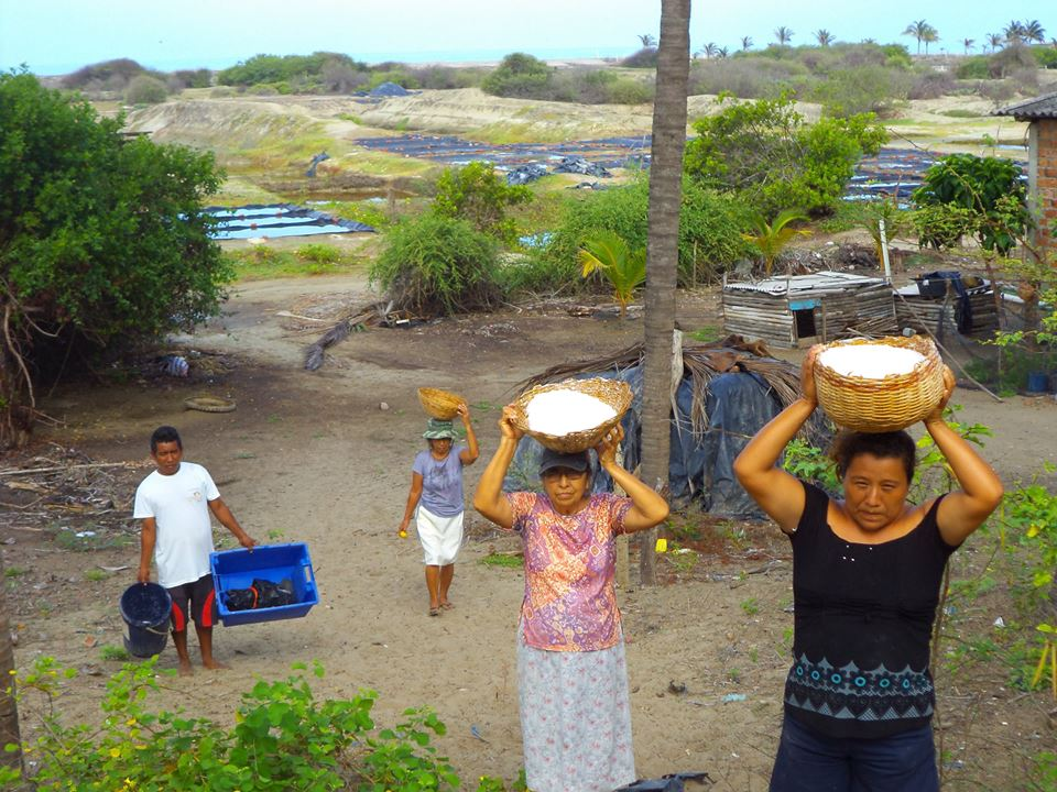 Recover the spice of life and return sustainable livelihoods to the community Las Gilces!