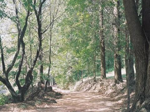 Parque dos Manacás - Foto 5