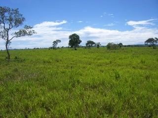 fazenda, primavera do leste, mato grosso mt, 2180 m2 - local do imovel classificados