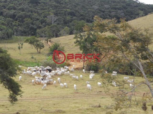 Fazenda / Sítio à venda em Centro, São José do Vale do Rio Preto - Foto 13