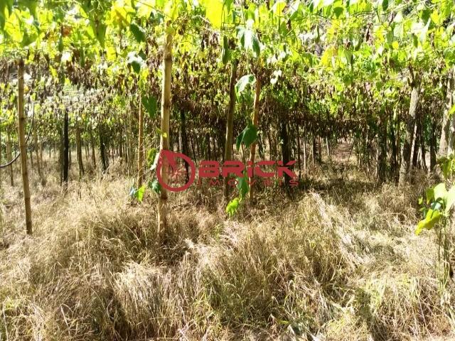 Fazenda / Sítio à venda em Centro, São José do Vale do Rio Preto - Foto 4
