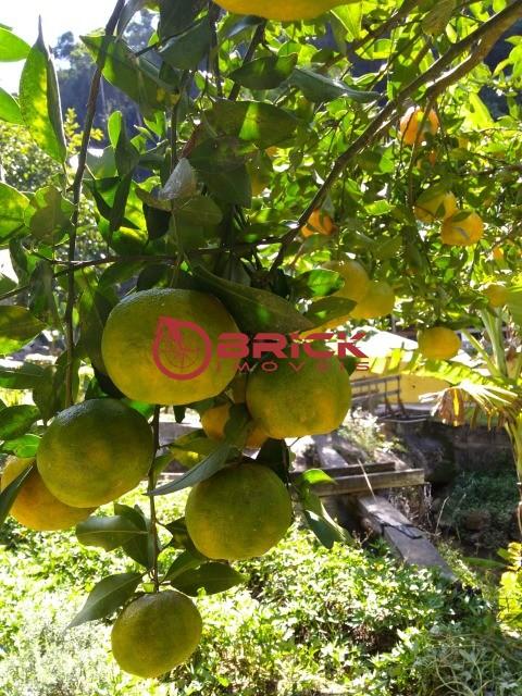 Fazenda / Sítio à venda em Pessegueiros, Teresópolis - Foto 10