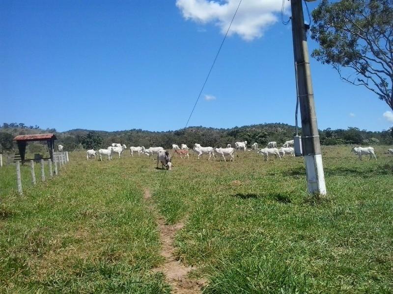FAZENDA RURAL em Goianésia - GO, Rural