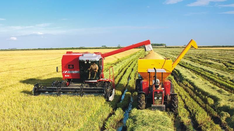 Camex zera imposto de importação para arroz