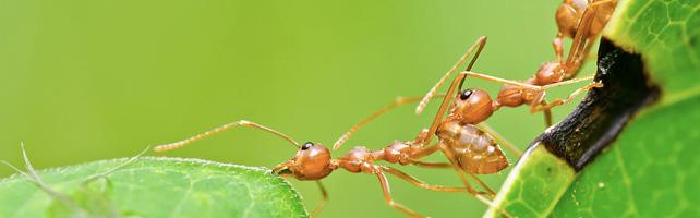 ants_teamwork