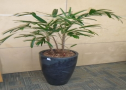 vaso-decorativo-com-planta