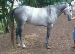 leilao-de-cavalos-black-tie-zorreiro
