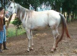 leilao-de-cavalos-ta-fame-easy