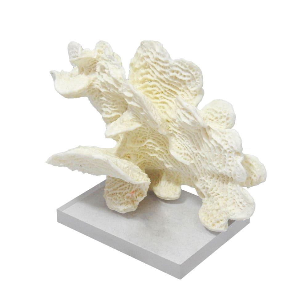 Escultura de Coral em Resina Branca e Base em Acrílico - 18x23x09cm