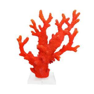 Coral Decorativo Vermelho com Base Translúcida - 21x28x10cm