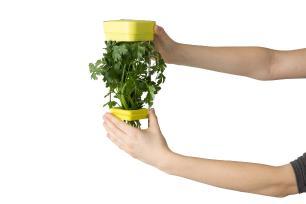 Pote a vácuo para  ervas frescas HerbFresh™  - Chef'n