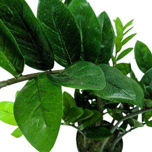 Planta Artificial Permanente Valence Zamioculcas 100cm