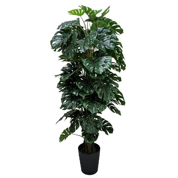 Planta Artificial Permanente Monstera Costela de Adão 180cm