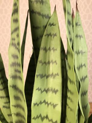 Planta Artificial Permanente Valence Espada de São Jorge 90cm