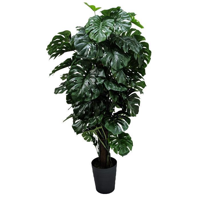 Planta Artificial Permanente Valence Costela de Adão 150cm