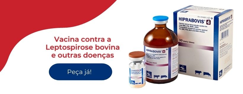 Hiprabovis 4