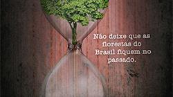 A importância de proteger a Floresta Amazônica