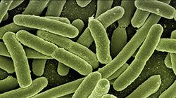 Superbactérias: reflexo da automedicação?