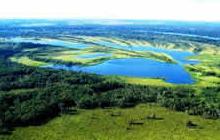A importância dos biomas brasileiros para a vida