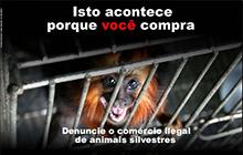 O combate ao comércio ilegal de animais silvestres