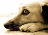 Alternativas para combater os maus tratos aos animais