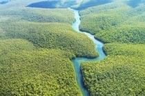 Proteção da Floresta Amazônica: dever do Brasil ou do mundo inteiro.