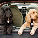 vacaciones viajar con mascotas