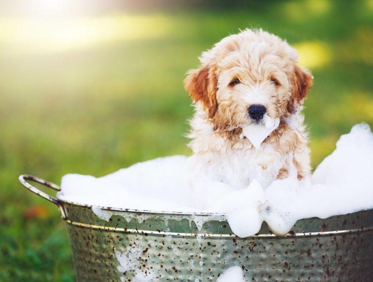 cuando se puede bañar a un cachorro