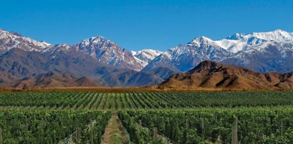 Mendoza viñedos
