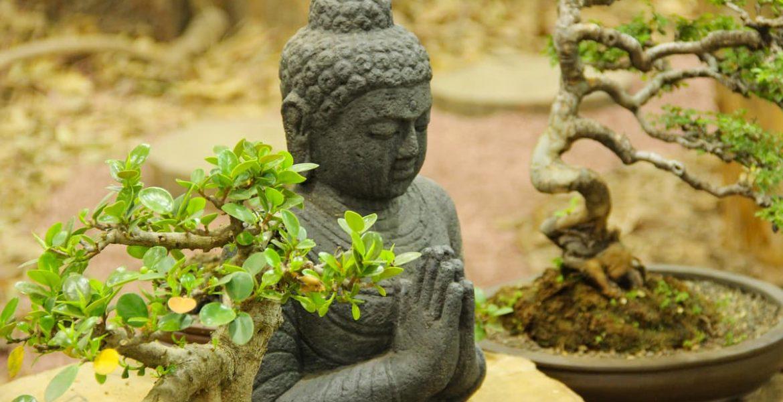 cómo cuidar un bonsai