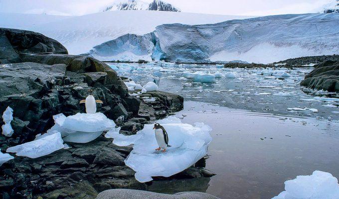 Antartida pingüino emperador