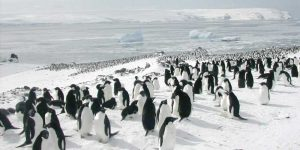 pinguinos antartida