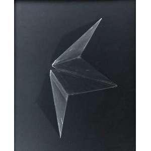 Leticia Ramos - (1976) - Bichos - silver print and photogram - 40 x 50 cm - 2017 - Acompanha certificado Mendes Wood DM