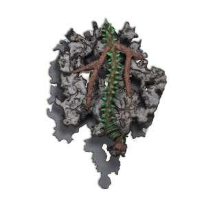 KRAJCBERG, Frans (1921 – 2017) - Sem Título<br>escultura em tronco de madeira pintado, ass. com as iniciais do artista no verso<br>(2010 / 2012)<br>com atestado de autenticidade de Marcia Barrozo do Amaral<br>124 x 92 x 33 cm