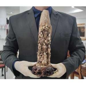 MAMMOTH IVORY CARVING<br />35 X 8 X 5 CM. <br />PESO: 725 G.<br />BASE: 6 X 14 X 10 CM.<br />Presa marfim de Mamute, extinto há 15.000 anos, fossilizado.<br />Cotação internacional média: vide fotos<br />Consta de finíssima talha:<br />OITO IMORTAIS TAOÍSTAS: HAN XIANG ZI, com flauta; LAN CAI HE com cesto de flores; <br />ZHONGLI QUAN o líder com duas ventarolas; HE XIAN GU com flor de Lótus; LU DONG BIN com espada; LI TIE GUAI com muleta de ferro; CAO GUO JIN com uma tábua de jade imperial; ZAN GUO LAO tubo com penas de Fênix. <br /><br /><br />____SOBRE O ENTALHE:<br />A longa história do marfim esculpido remonta aos tempos antes das dinastias Qin e Han. Nas dinastias Ming e Qing o nível técnico e artístico atingiu um clímax. Durante o período da República da China, a escultura de marfim era uma escola independente incomparável. A essência desse ofício permanece, até hoje, graças à transmissão de mestre-discípulo nas oficinas de famílias que vivem do oficio da escultura. <br />Com a proibição da importação de marfim africano e o enriquecimento da população chinesa, as grandes obras de marfim - símbolo de status - estão se tornando no Oriente cada vez seletas e de valores elevados.<br />___SOBRE O MARFIM DE MAMUTE:<br />A partir do ano de 1989, devido a leis internacionais de preservação dos elefantes, o marfim de mamute, originário das regiões isoladas na Sérvia e Ártico passou a ser garimpado durante os curtíssimos meses de verão, por caçadores de marfins fósseis, que enfrentam ventos gelados e águas frias, procurando as presas que aparecem com o derretimento do gelo. A maior parte do marfim tem uma coloração azulada ou acastanhada devido a ter ficado enterrado em solo rico de minerais por milhares de anos. O marfim sólido, com pouca ou nenhuma descoloração, como o usado nesta escultura, tem preço muito mais elevado. <br />Após as presas de mamute serem encontradas, são transportadas para a China continental onde especialistas e requintados escultores de marfim e