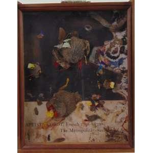HENRIQUE BUENO - Ebó Corôt - Madeira, vidro e elementos naturais - Assinado no verso, dat 2015 - 60 x 47 x 14 cm.