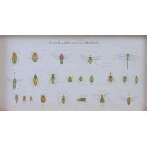Walmor Corrêa - Gaveta Entomológica - 2009, Porto Alegre - Técnica mista em caixa de madeira e vidro - 28,5 x 54,5 cm