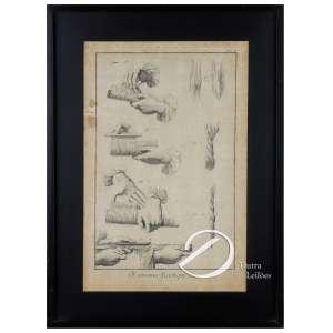 Gravura européia explicativa do beneficiamento do algodão intitulada OEconomie Rustique, coton; 35,5 x 22,5 cm. França, séc. XIX.