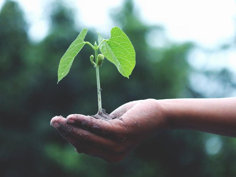 Artigo: Nossa oferta é uma semente