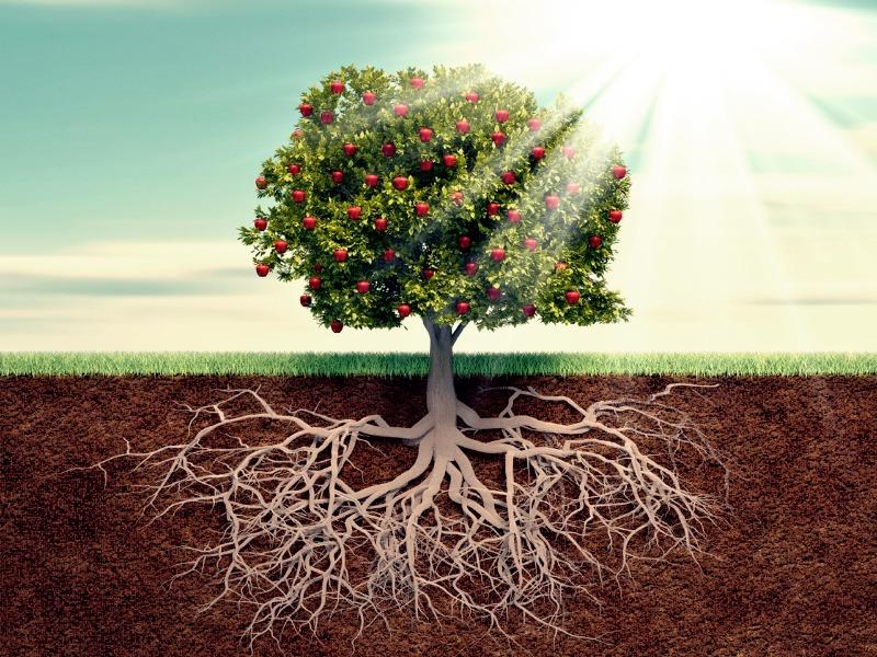 Criando raízes