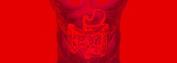 O que a sua microbiota intestinal tem a ver com o seu peso?
