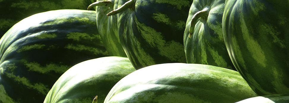Alimentos que hidratam e nutrem recomendados para o verão