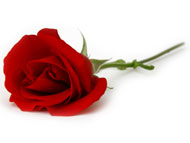 A Rose from Homer's Grave Part 2