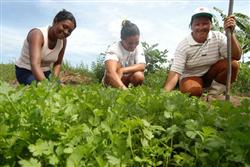 Agricultura familiar baiana recebe investimento recorde