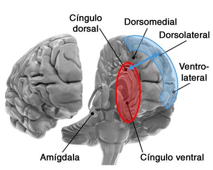 Convexidade frontal