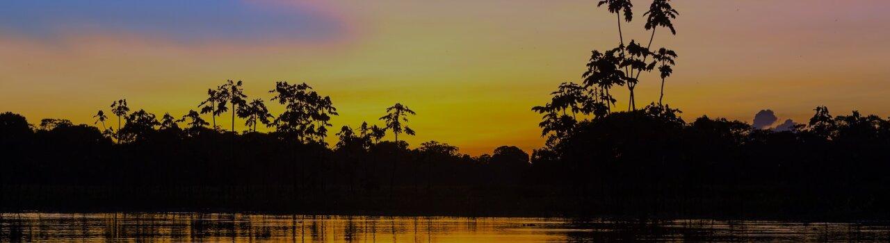 Floresta tropical à noite