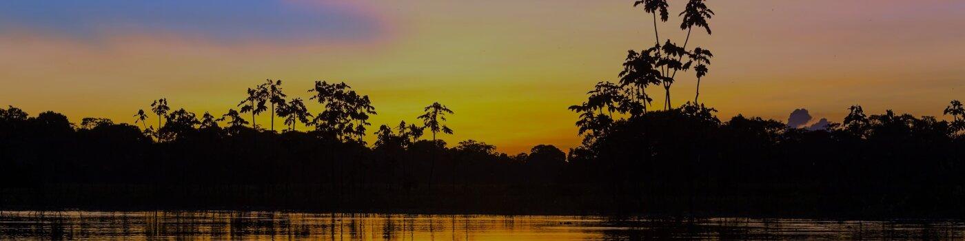 Rainforest at night
