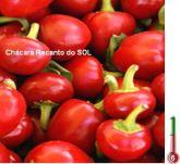 Pimenta bode vermelha frete gratis